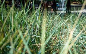 Niekoszenie traw będzie kontynuowane, ale na innych zasadach