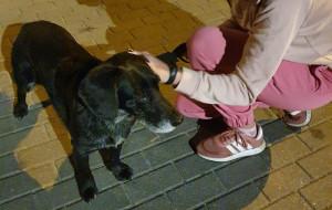 Zabezpieczyli psa, znaleźli rodzinę właściciela. Interwencja naszych czytelników