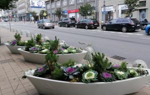 Jesienne nasadzenia w Gdyni