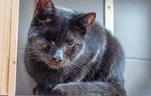 Jednooka smutna Czarnusia. Młoda kotka szuka domu