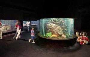 Dwa i pół roku na rozbudowę Akwarium Gdyńskiego