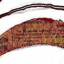 Fragmenty starych włoskich gazet znalezione w papieskim parasolu
