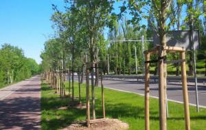 Drzewa zamiast aut w centrum Gdyni
