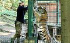 """Opiekunowie z zoo: """"Każda chwila z drapieżnikami daje niezapomniane wrażenia"""""""