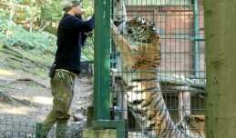 Opiekunowie z zoo: