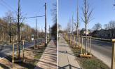 Do końca roku przybędzie drzew w Sopocie