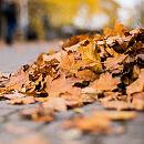 Pamiętajmy o sprzątaniu liści sprzed posesji