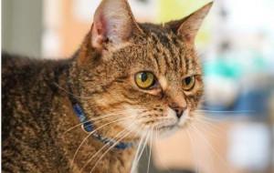 Odinka - kotka po przejściach szuka domu