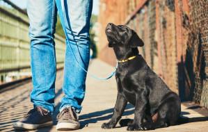 Kwarantanna a spacery z psem. Gdzie znaleźć pomoc?