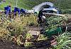 Jar Wilanowski pięknieje. Ponad 800 nowych roślin w ogrodzie deszczowym