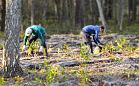 2020 nowych drzew dzięki śmieciowemu kalendarzowi