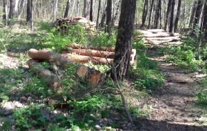 Ekshibicjonista w lesie przy Kaczych Bukach