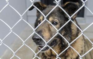 Psy zabrane z Radys znalazły nowe domy