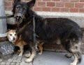 Psy muszą mieć kagańce, ale nie wszystkie