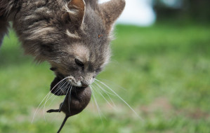 Trutka na gryzonie i lisy zagrożeniem dla wszystkich zwierząt