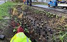 Ponad 1200 nowych roślin w ogrodzie deszczowym na Przeróbce
