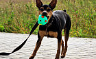 Tofik - mały pies, wielka osobowość