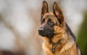 Jelitkowo. Właścicielka pogryzionego psa prosi świadków o kontakt