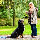 Ranking: najlepsze ośrodki szkolące psy w Trójmieście