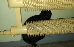 Morena: czarny kot błąka się po klatce schodowej. Rozpoznajesz go?
