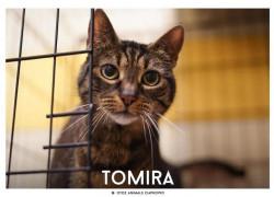 Tomira: kotka po przejściach szuka spokojnego domu