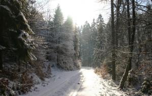 Zimowe spacery po lasach wokół Trójmiasta