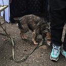 Wyziębione psy i koty karmione wodą z ryżem odebrane właścicielce