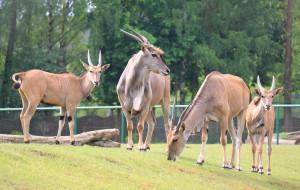 Nowe inwestycje w gdańskim zoo. Zwierzętom będzie wygodniej
