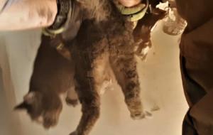Strażacy burzyli ścianę, by uratować uwięzionego w niej kota