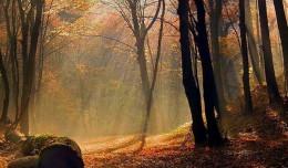 Ekolodzy: drzew w lasach nie trzeba wycinać