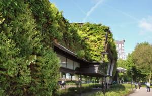 Zielone ściany i dachy w Gdańsku. Czy ten pomysł się przyjmie?