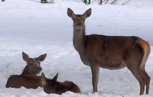 Walentynkowy weekend tropem dzikich zwierząt w gdańskim zoo
