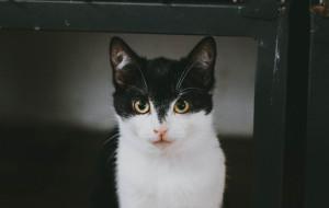Sówka - wyjątkowej urody kocie dziecko szuka domu