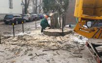 Wycinka kolejnych drzew w śródmieściu Gdańska