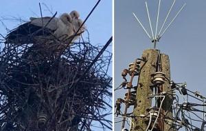 Spór o bocianie gniazdo. Ptaki przegrają z samolotami?