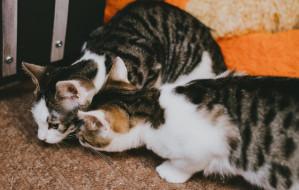 Pięciomiesięczne kocie rodzeństwo pilnie szuka domów