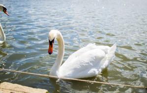 Sopot w strefie zagrożenia wystąpieniem grypy ptaków