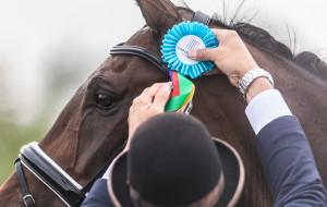 Hipodrom Sopot odwołuje zawody jeździeckie w marcu. Powodem herpeswirus