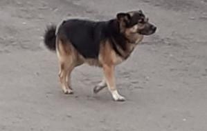 Awantura o psa puszczonego bez smyczy. Jedna osoba trafiła do szpitala