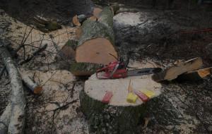 Wycięto stuletnie drzewa przy al. Zwycięstwa w Gdańsku. Tłumaczenie dewelopera