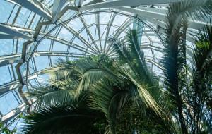 Trwa walka o przeżycie palmy z parku Oliwskiego