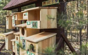 Na Wyspie Sobieszewskiej powstało ptasie osiedle