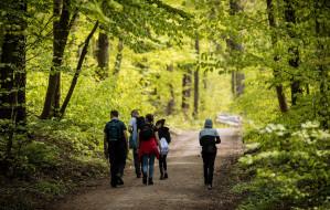 Dziś Światowy Dzień Lasów. Wykorzystaj to!