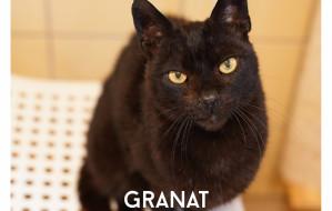 Granat - kot z interwencji już trzy lata w schronisku