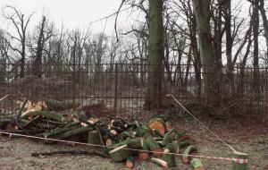 """Mapa i """"książeczki zdrowia"""". Radni chcą systemu ochrony drzew"""