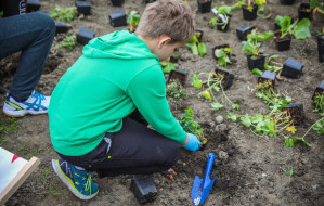 Ekologiczny ogród w mieście. Odbierz dotację na ogród deszczowy