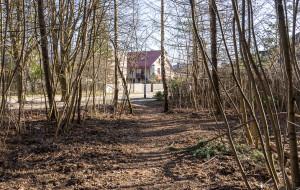Osowa: alejki spacerowe w parku leśnym