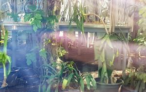 Botanik uspokaja w sprawie roślin z oliwskiej palmiarni
