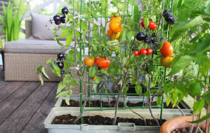 Ogródek w bloku? Zobacz, co możesz uprawiać na balkonie