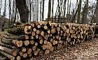 Spór o wycinkę ponad 200 drzew na Westerplatte